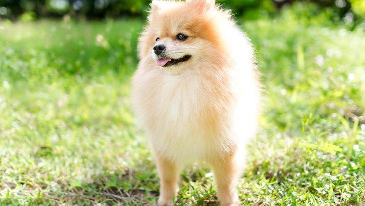 犬の被毛を手入れする3つの方法と注意したいこと