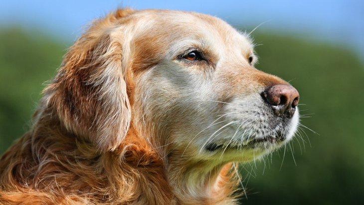 犬は何歳から『老犬』になるの?シニア犬がよく見せる行動3選
