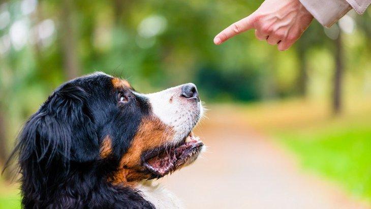 もしかしたらあなたも?残念な犬の飼い主の特徴5選
