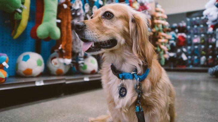 犬と一緒にドックランやお店、喫茶店などに行くときの注意点とは?