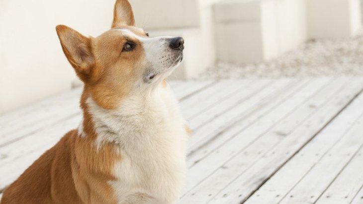 犬に『マテ』をする時にしてはいけないNG行為4選