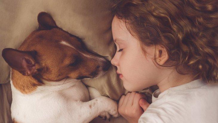 犬が朝に飼い主を起こしに来る心理3選