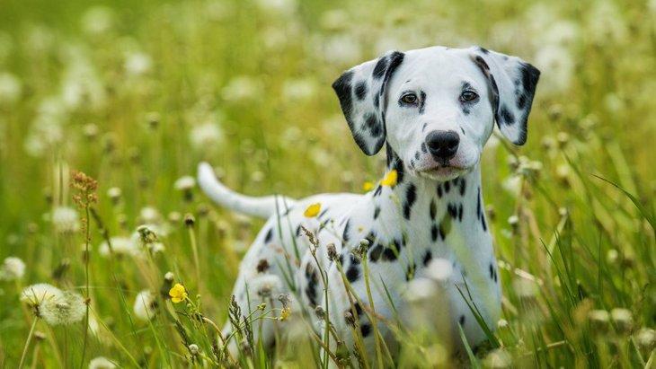 犬が『本当に焦っている時』に見せる仕草や行動4選