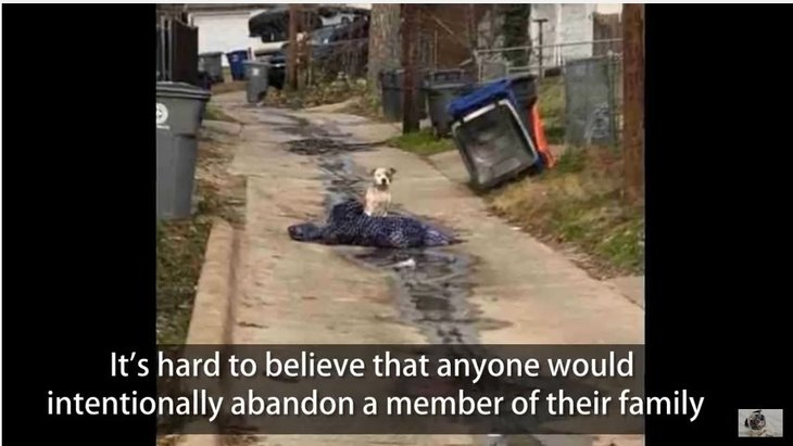 引っ越しの際に置き去りにされた犬…彼女が人間を信頼するまでの話
