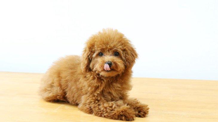【犬の毛について】ダブルコートとシングルコートってなに?