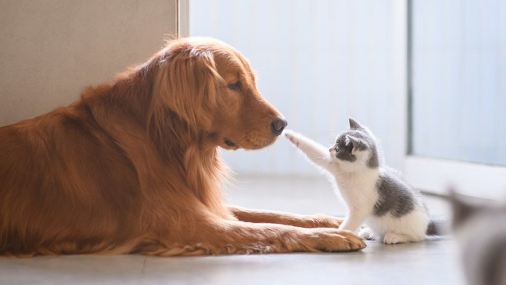 『犬と一緒に飼うべきではないペット』5選