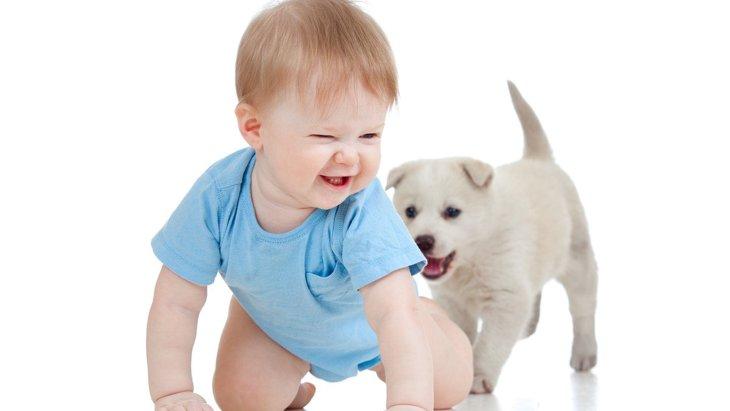 犬が『人の後ろについてくる』時の心理7選