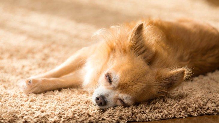 犬が一人になりたがる時の5つの心理