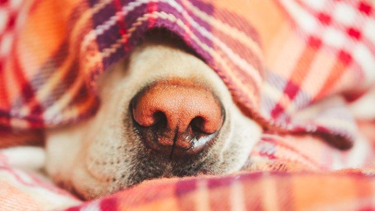 老犬のための災害対策5つ