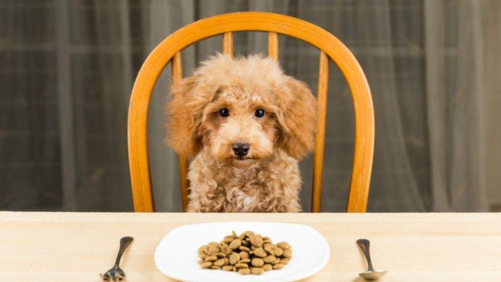 愛犬の食欲がない時に試したい!家庭で出来る3つの工夫