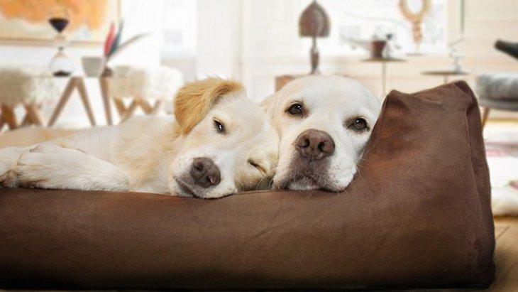 犬同士がくっついて眠っている時の心理3選