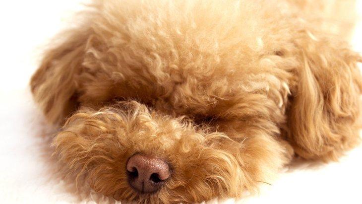 『愛犬が死ぬ夢』を見る意味とは?3つの心理状態を解説
