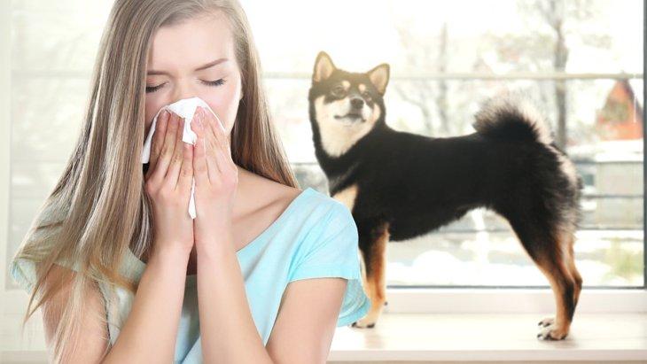犬アレルギーでも飼いやすい犬種 一緒に暮らすためのおすすめ対策