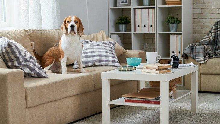 家の中にも危険はいっぱい!犬が室内で怪我をしてしまう原因4つ
