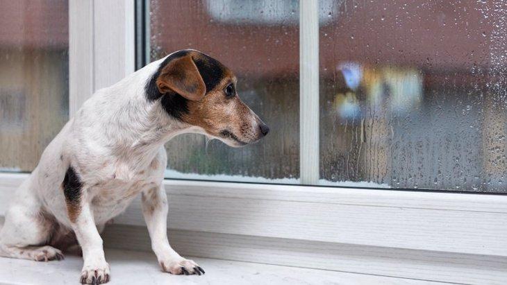 犬が愛情を無くしてしまう飼い主のNG行為6選