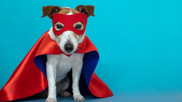 犬は生まれついてのヒーロー!飼い主を救おうとする犬たちの研究