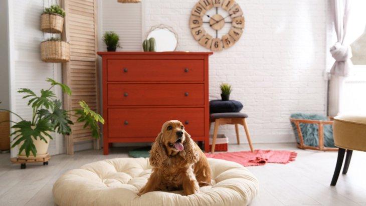犬がベッドでくるくる回る時の心理5選