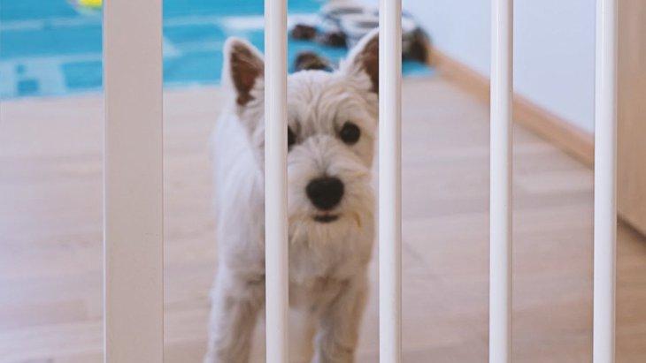 室内犬が怪我をしやすいNGな環境5選!必ず意識して改善しよう!