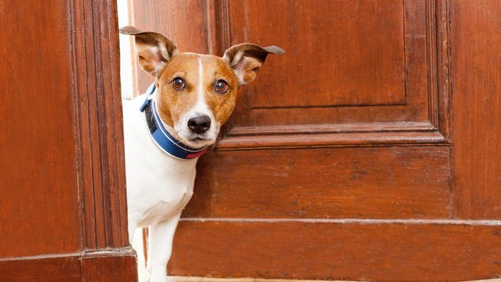 犬が散歩を楽しめなくなってしまうNG行為5選