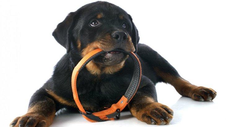 犬につけてはいけない『首輪』2選!NGな理由から正しい選び方まで解説