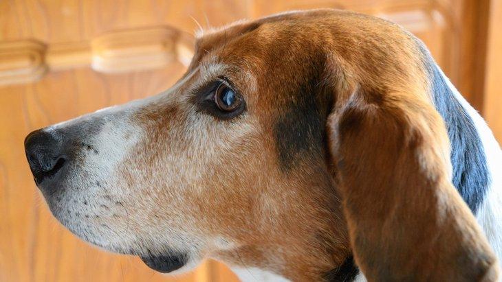 犬は人間の目に見えないものが見えている?