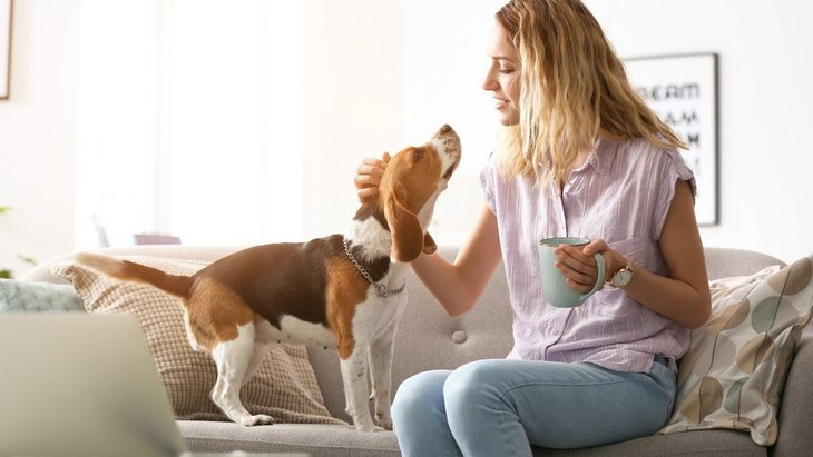 新型コロナウイルス対策の自宅待機中の犬の福祉について考える