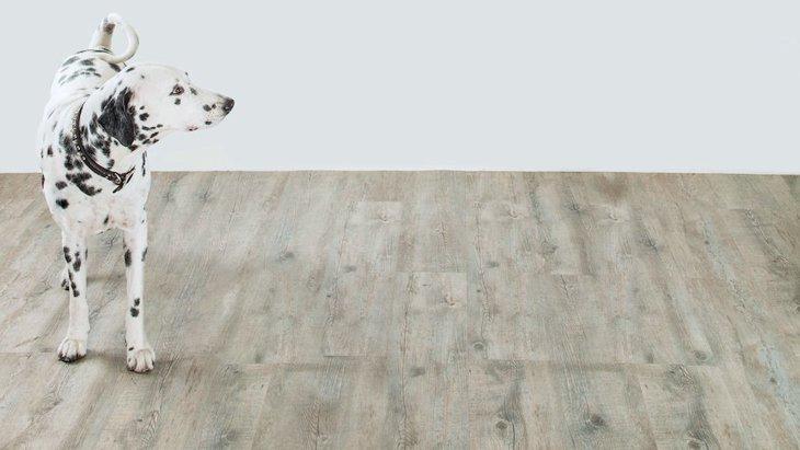 愛犬を守るフローリングの滑り止め対策!その必要性やおすすめグッズまで