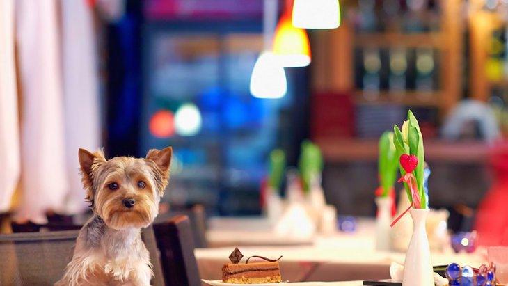 ドッグカフェと普通のカフェの違い5つ