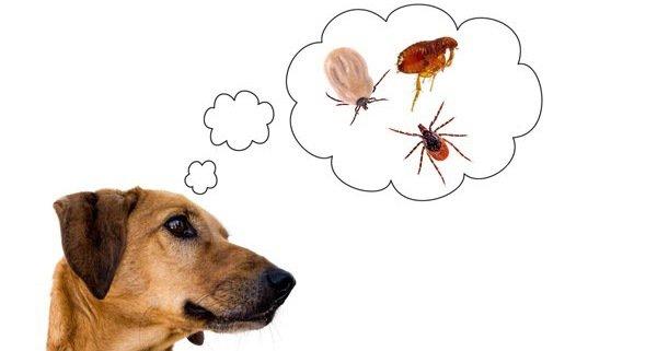 ネクスガードスペクトラで犬の寄生虫対策!負担が少なく多様な効果を引き出す