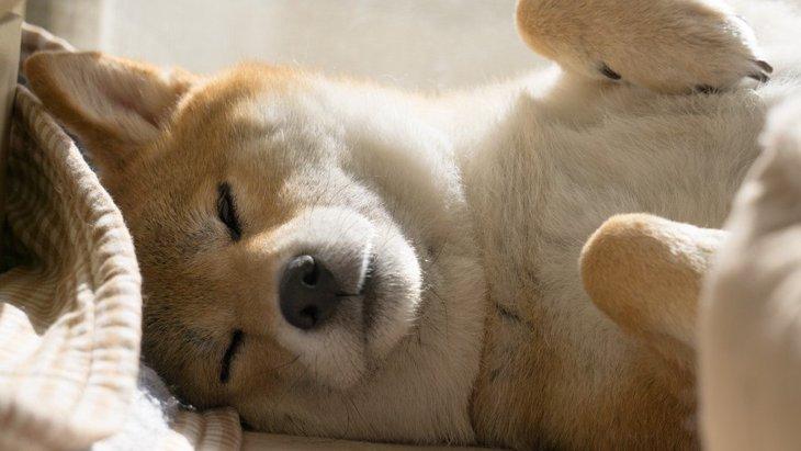 【あるある】犬が寝ている時にする『謎な行動』4選
