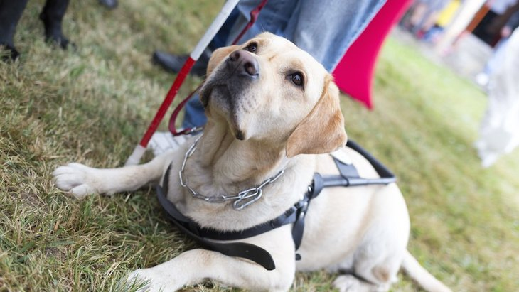 盲導犬訓練士になるには?主な仕事内容や必要な資格