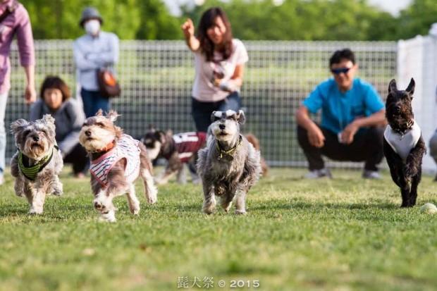 秋だ!愛犬と一緒に行けるイベント【2015年10月】(まとめ)
