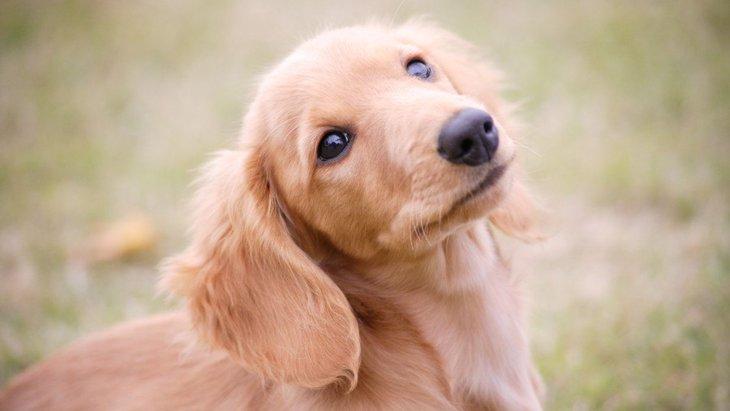 犬の体を温めるメリットと方法