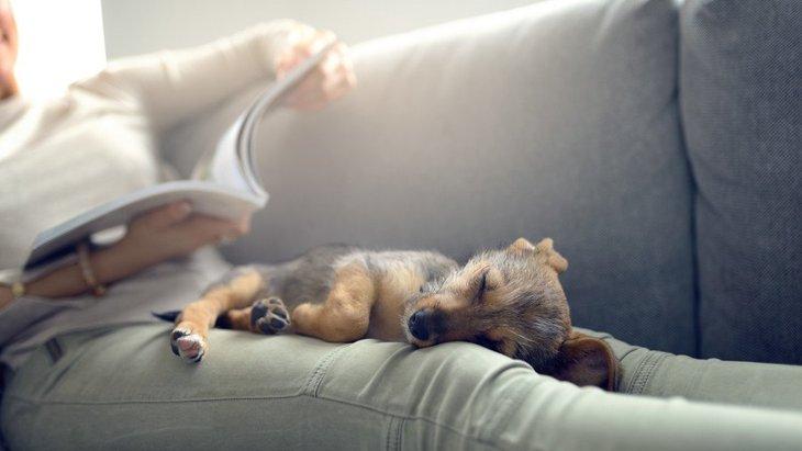 あなたの愛犬はどこがお気に入り?♡犬がよくいる『室内の場所』12選