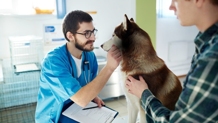 犬の入院 準備する事や費用について