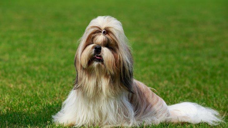 比較的おとなしくて飼いやすい犬種6選