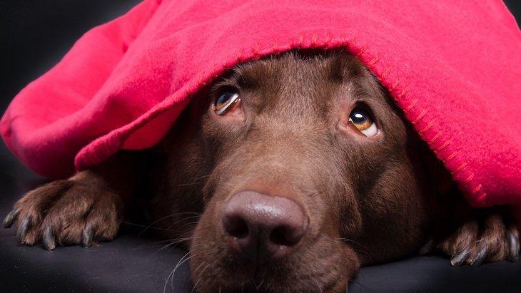 不安から来る犬の問題行動に犬種や遺伝が関連している可能性【研究結果】