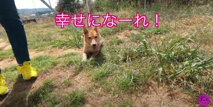 保健所から引き出された超臆病な野犬『のび太』のビフォーアフターに感動