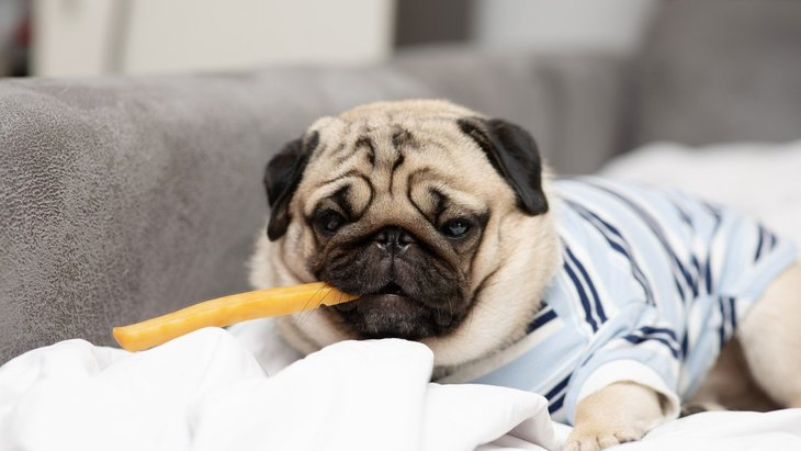 犬が知らないうちに『お菓子を盗み食い』!トラブルを防ぐ4つの対策方法