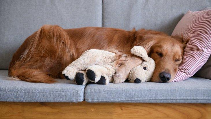 犬に長時間のお留守番をさせる時に絶対やるべきこと5つ