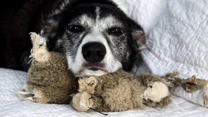増え続けている老犬介護施設「老犬ホーム」って?