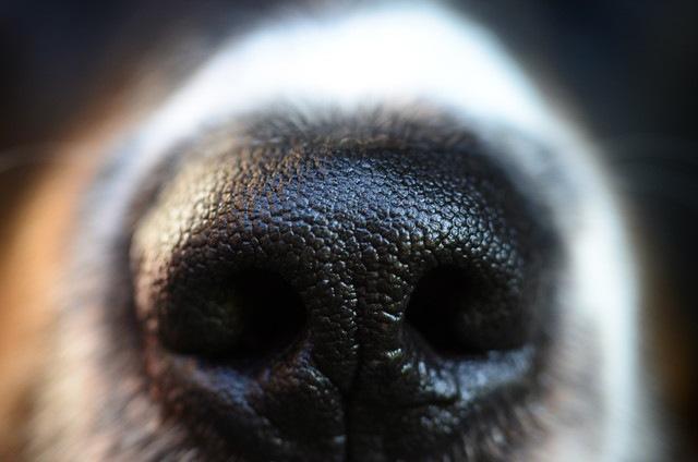 匂いをスンスンしている犬は、何が見つかるか予測しているという研究結果