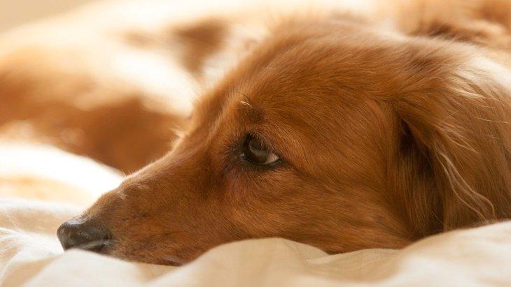 普段の生活でひと工夫!犬の認知症を予防するためにやるべきポイント