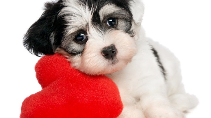 犬にも枕は必要?使用するメリットとおすすめ商品3選