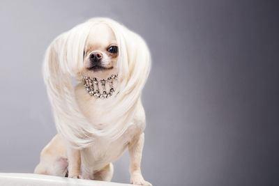 おしゃれな犬の首輪のおすすめランキングTOP3!人気の革の首輪からリードまで