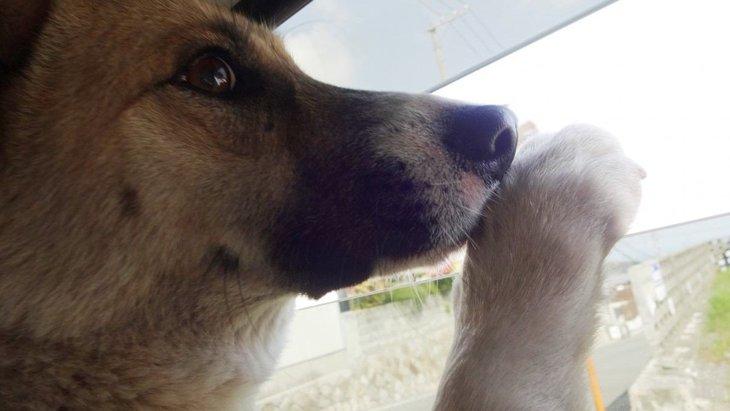 犬を保護した時に気を付けてほしいこと―捨て犬?迷い犬?