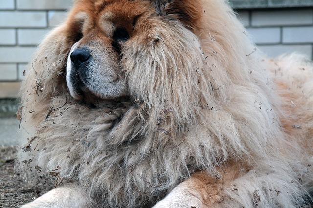 愛犬の毛玉対策は必須!放置すると病気になることも