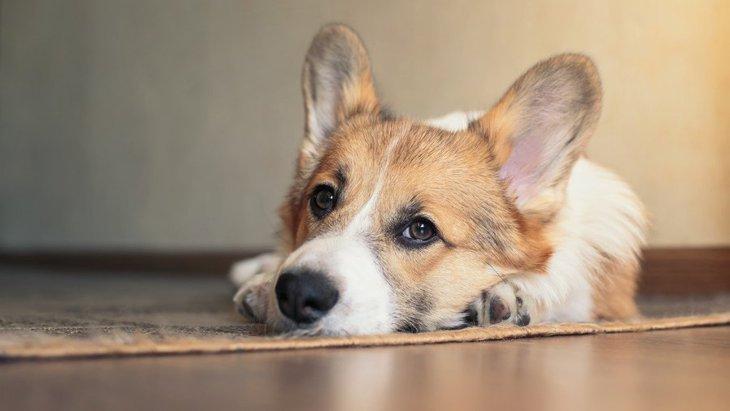 犬が熟睡できない『NGな環境』5選
