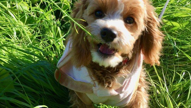 愛犬と外で遊ぶときに気を付けたい4つのこと