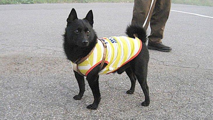様々な現場で人を助ける、驚くべき犬の能力に迫る!